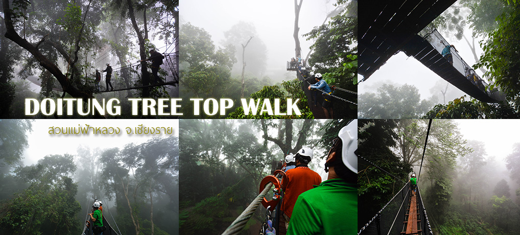 DoiTung Tree Top Walk