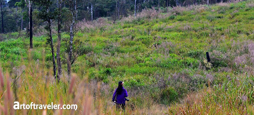 โครงการฟื้นฟูอาหารช้างป่าภูหลวง ฯ